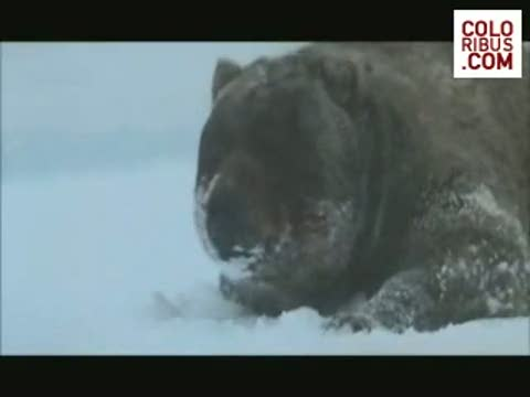 the-state-of-russia-tv-programme-russian-bear-600-12318